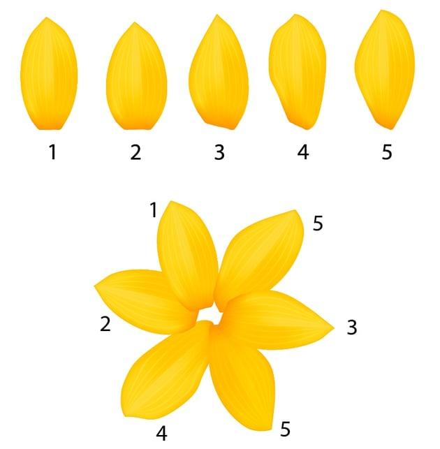 a 6 petal flower using the fifth petal twice