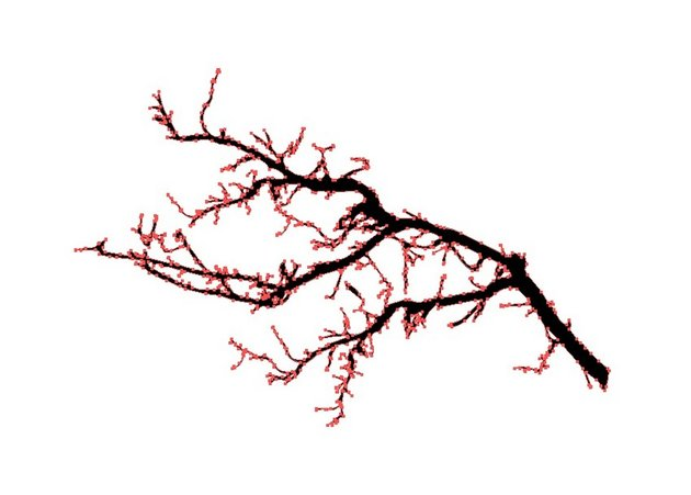expand branch