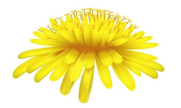 photo-realistic vector dandelion tutorial