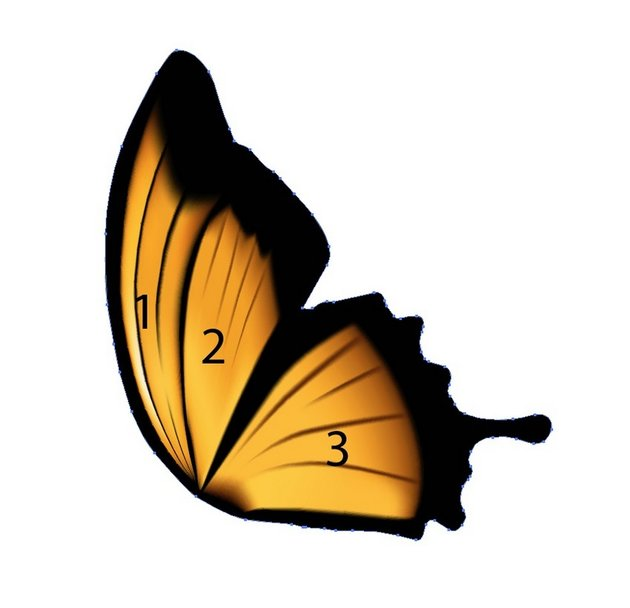 how to draw butterfly in illustrator