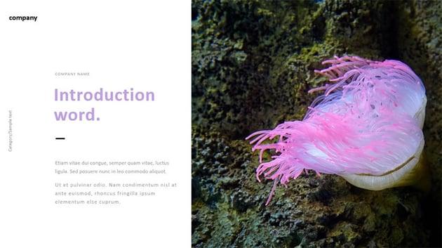 Clean Presentation Slide Design