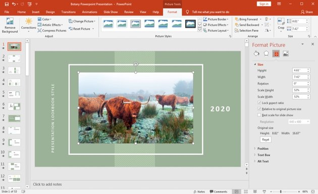 Working with image in PowerPoint