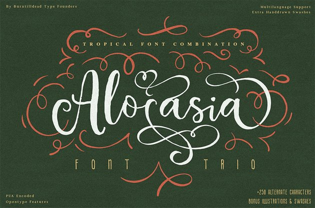 Alocasia Calligraphy Font with Swashes