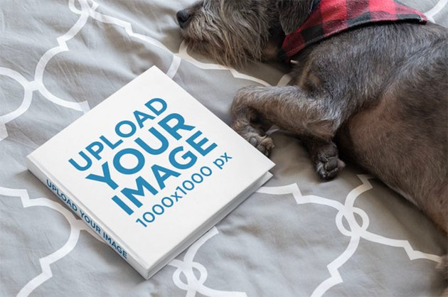 Square Cover Mockup Featuring a Small Dog Lying on a Bed