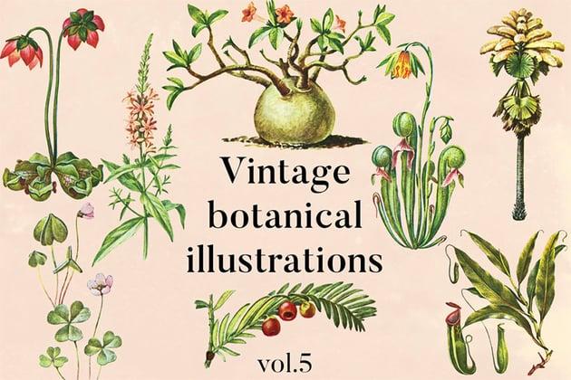 Select Vintage Plant Illustration