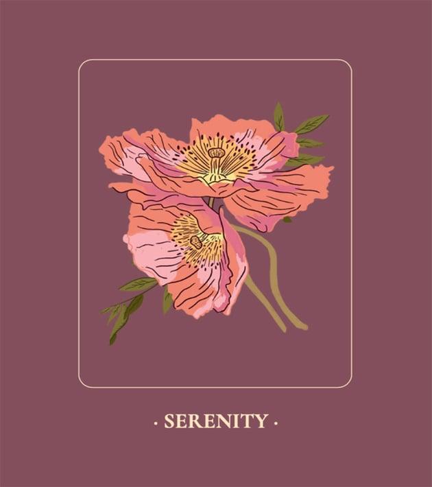Poppy Botanical Illustration