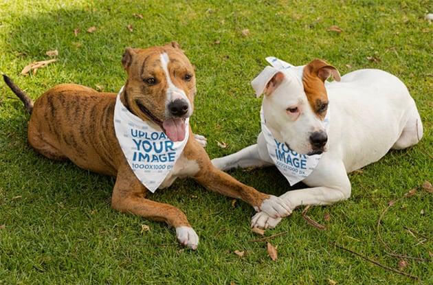 Pet Bandana Mockup of Two Dogs