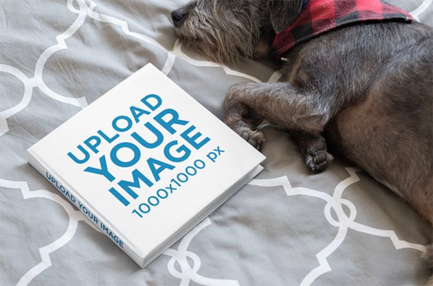 Square Book Mockup Featuring a Small Dog Lying on a Bed