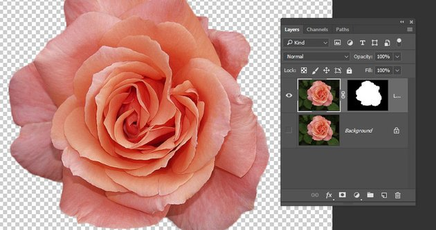 Select the Rose Image