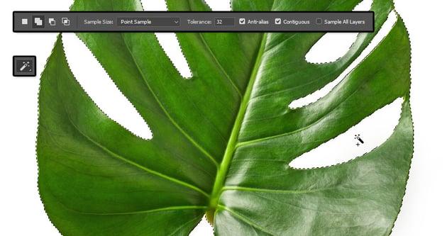 Select the Leaf