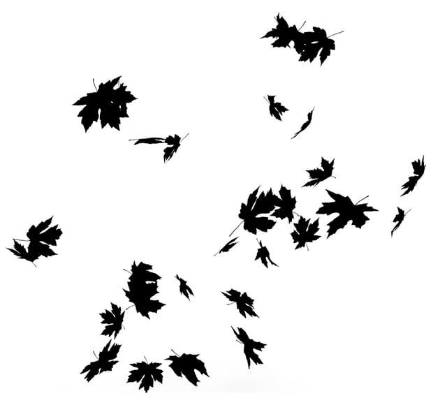 crop leaves