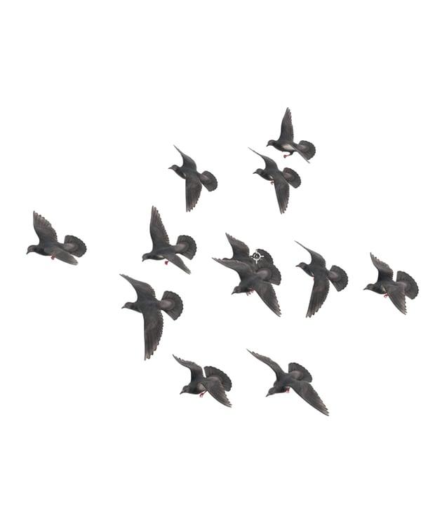 3d bird asset