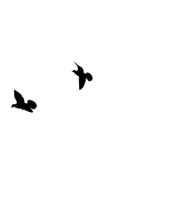 mask birds