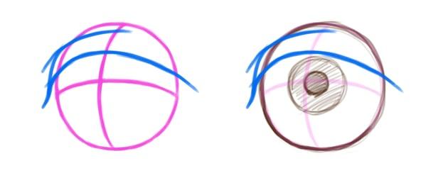 Example of eye lid on top of eye ball