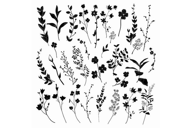 Black Hand Drawn Herbs, Plants and Flowers