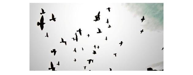 Bird Silhouette Brushes