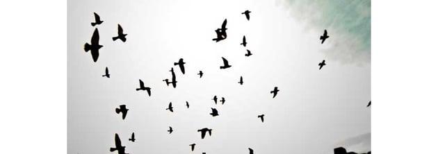 8 Birds Silhouette Brushes