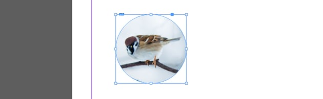 Images Masked with Circle