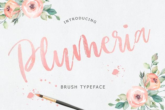 Plumeria (Popular Brush Script Fonts)