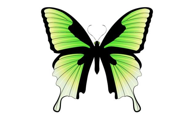 Bitter Liquorice Butterfly