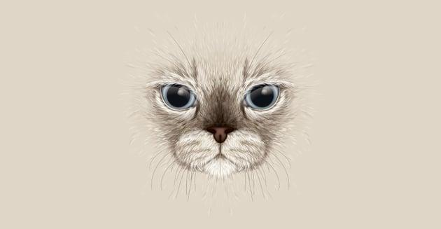 Mirrored Kitty
