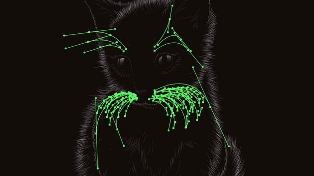 Adding whiskers