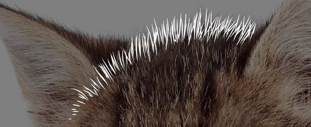 Forehead hair