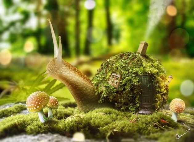 Snail Photo Manipulation by Ashad Nair