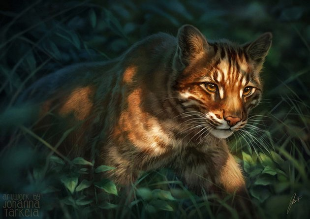 Cats for Catamancer by Johanna Tarkela