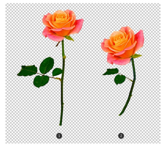Rose before and after adjustment