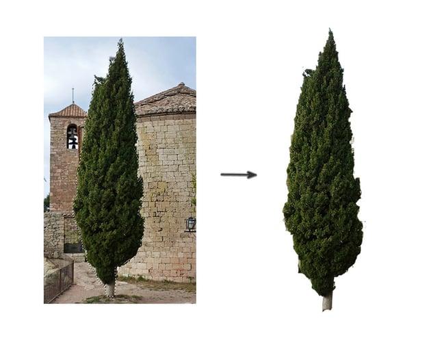 Extract the tree