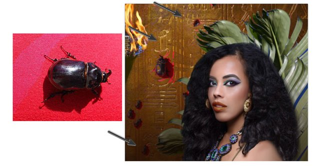 Add the scarab beetles