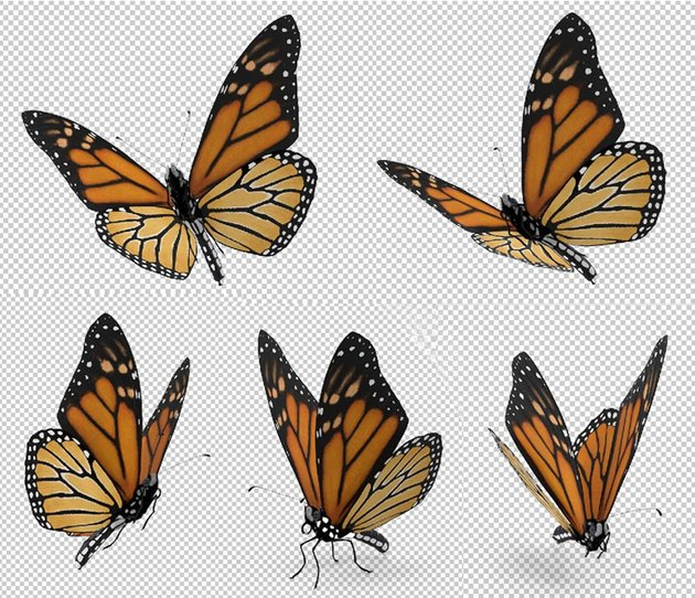 Butterfly angles