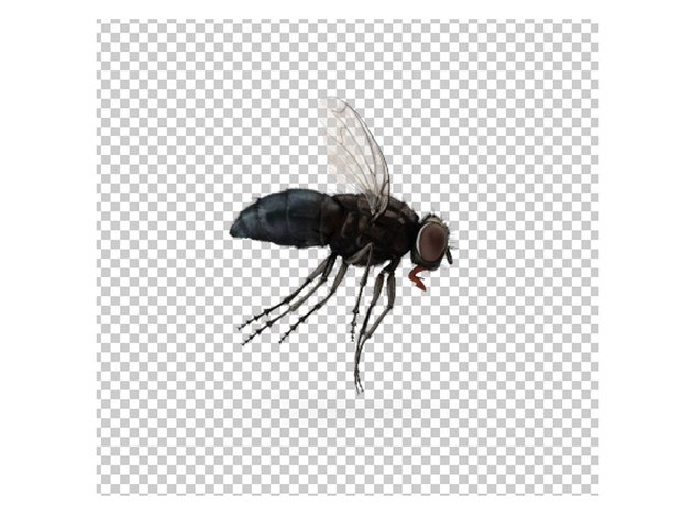 Download the fly stock