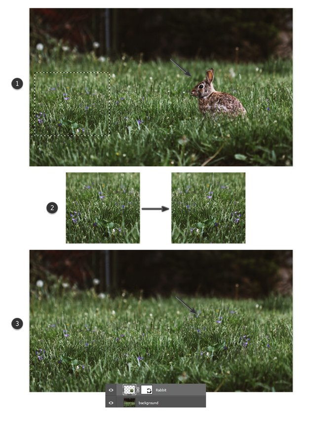 Remove the rabbit