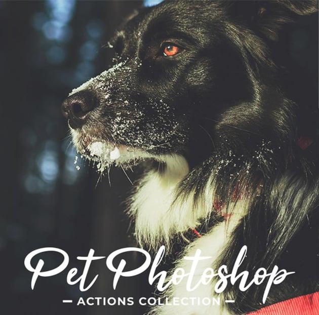 Pet Portrait Photoshop Actions