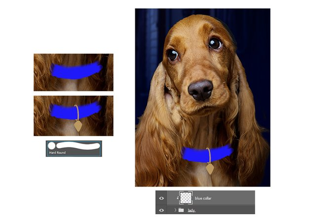 Draw the blue and gold dog collar