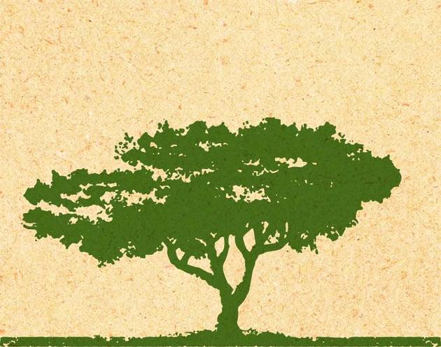 Illustration of a cedar tree