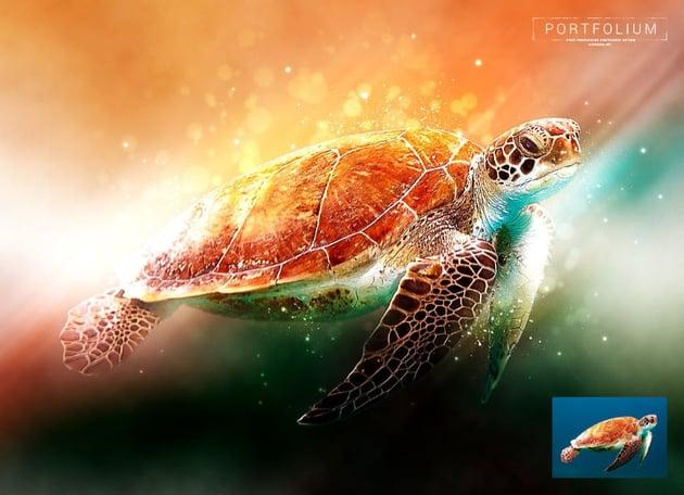 See turtle in rainbow-coloured light