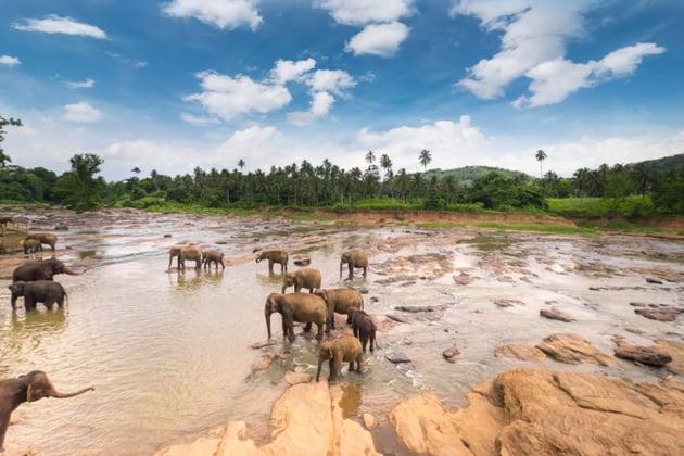 Elephants in a river