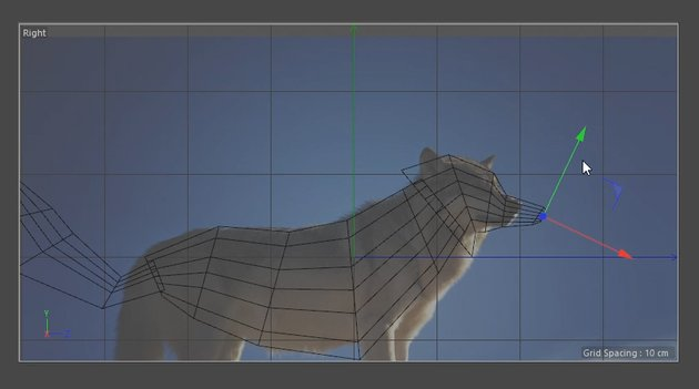 Modelling the Wolfs head