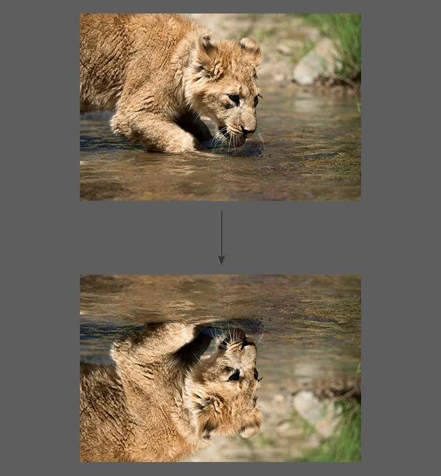 Flip image vertically