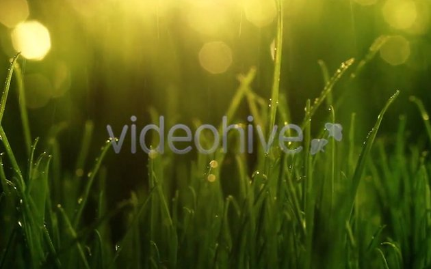 Close-Up Shot Of Green Grass With Rain Drops