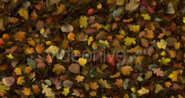 Falling Leaves Fill Screen Overlay