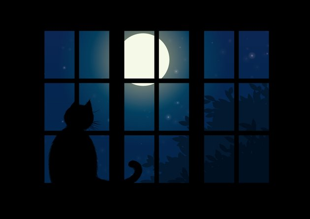 Silhouette of a cat sitting in a window