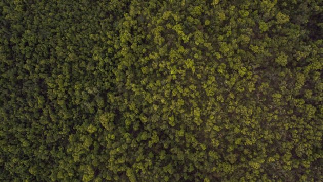 Forest as seen from a UAV