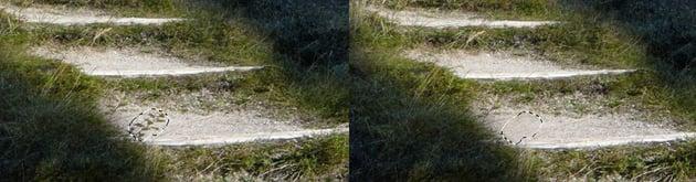 pathway clone