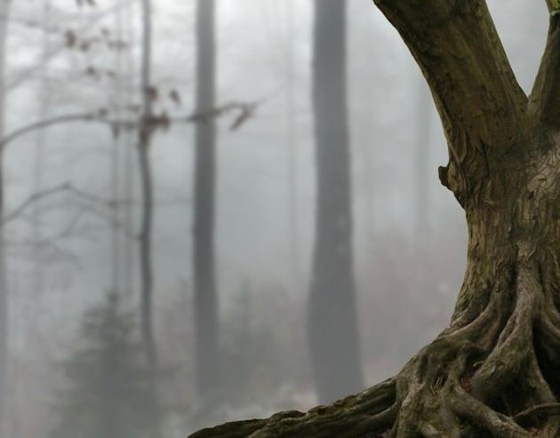 branch masking