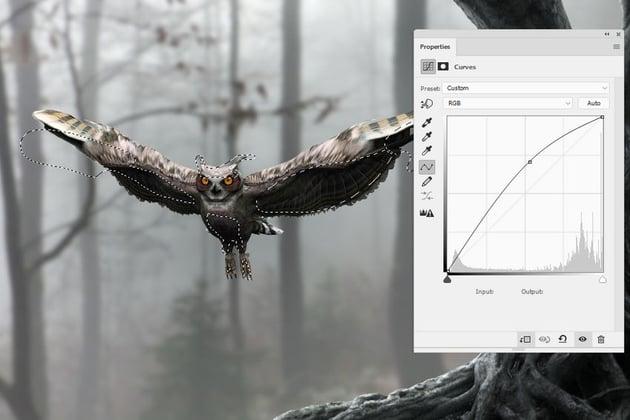 owl curves