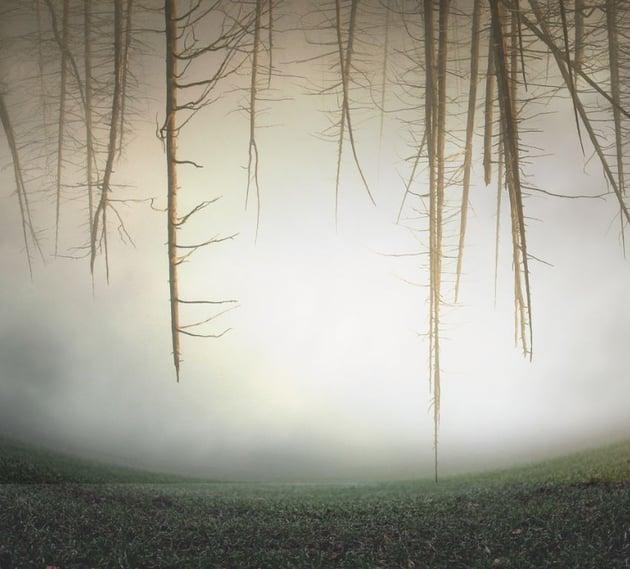 trees hard light mode